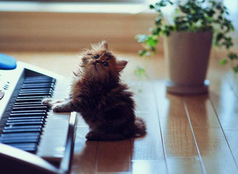 Самый милый котик фото, картинки | 587x800