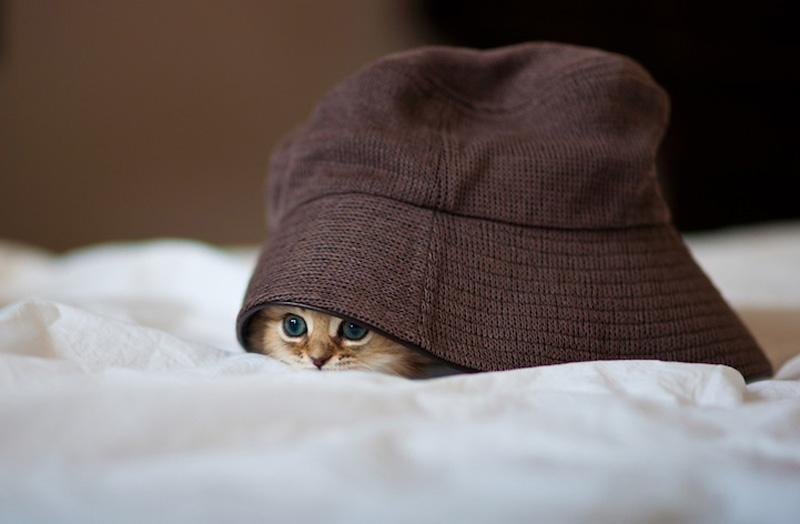 kitten 5 Самый милый котенок на Земле