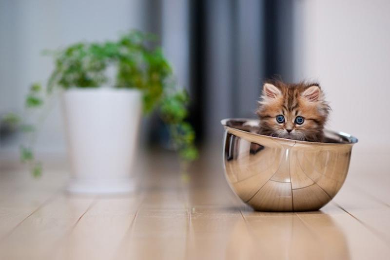 kitten 6 Самый милый котенок на Земле