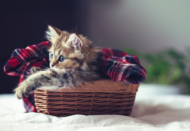 kitten 7 Самый милый котенок на Земле