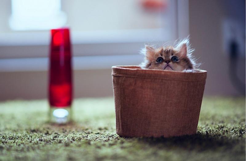 kitten 8 Самый милый котенок на Земле