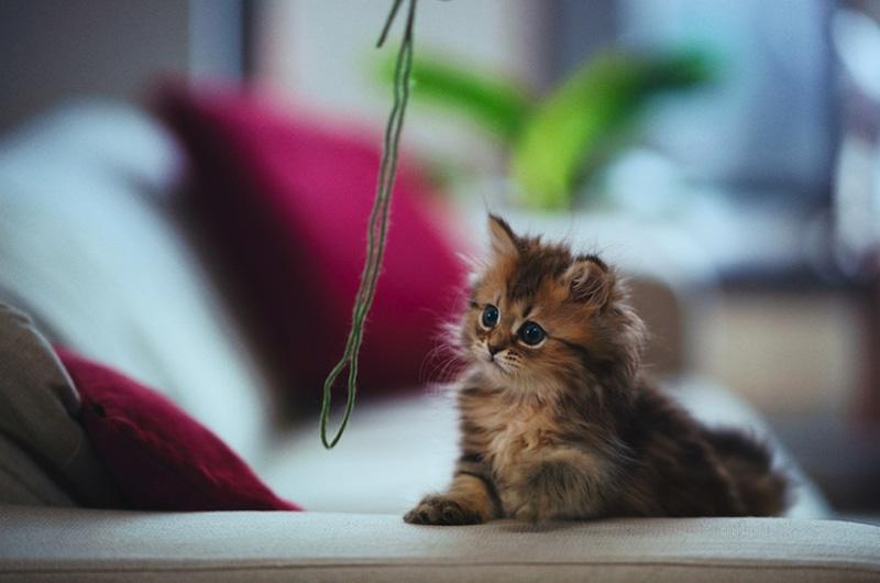 kitten 9 Самый милый котенок на Земле