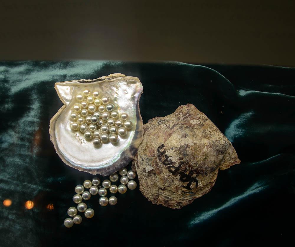 pearl06 Как выращивают жемчуг в Эмиратах