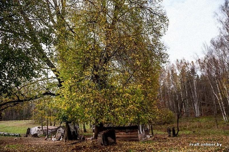 206 800x532 Белорусские отшельники уже20 летживут безсвета, газа иводопровода, нонасвоей земле