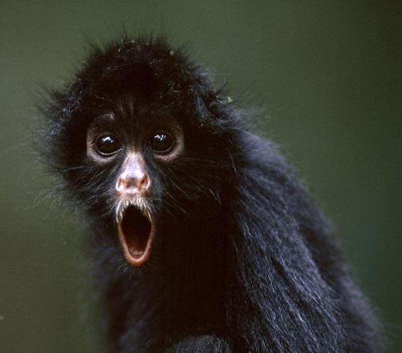 35 Animal 10 Животные, которые волнуются за вас