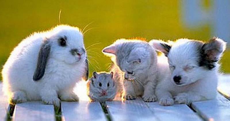 35 Animal 13 Животные, которые волнуются за вас