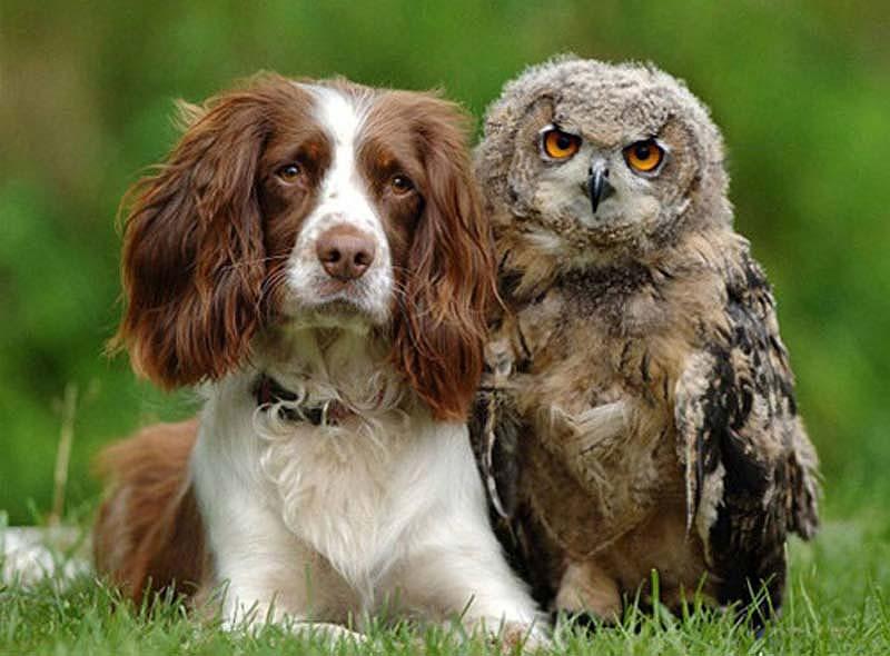 35 Animal 16 Животные, которые волнуются за вас