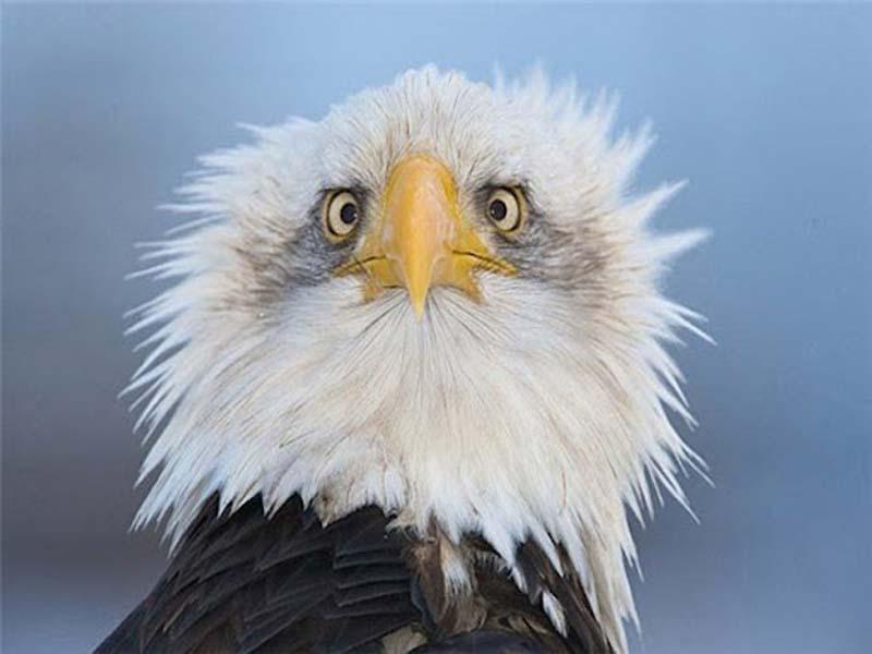 35 Animal 17 Животные, которые волнуются за вас