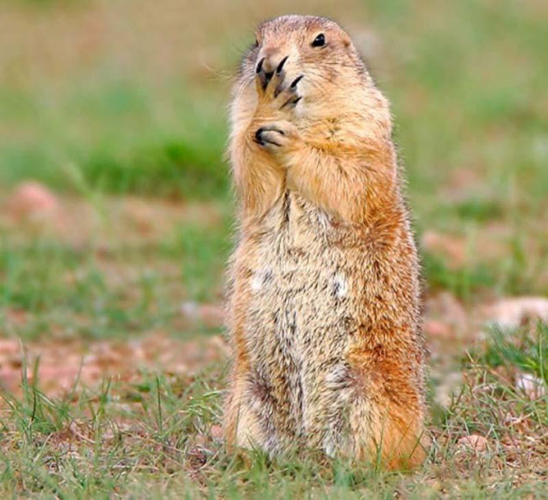 35 Animal 20 Животные, которые волнуются за вас