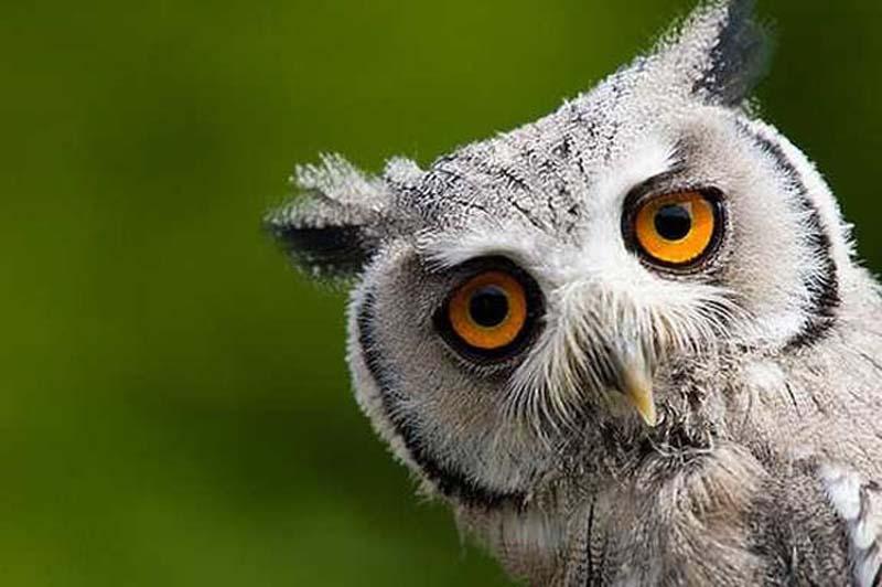 35 Animal 24 Животные, которые волнуются за вас
