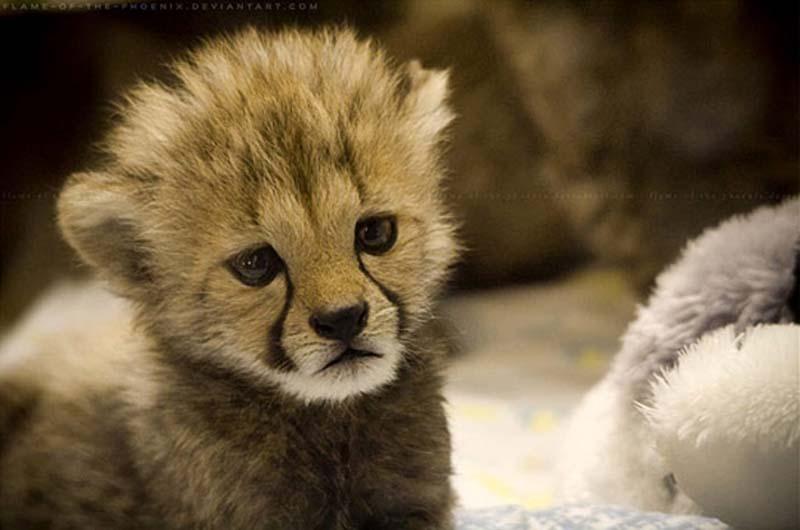 35 Animal 6 Животные, которые волнуются за вас