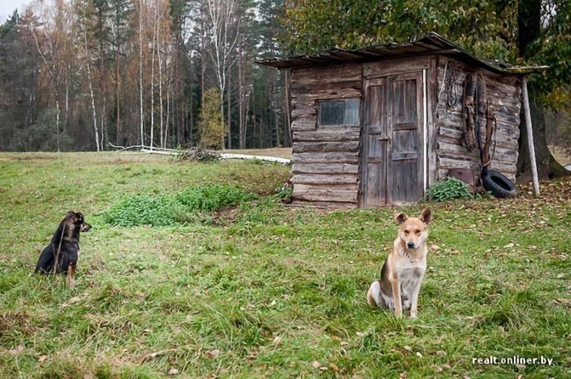 421 800x532 Белорусские отшельники уже20 летживут безсвета, газа иводопровода, нонасвоей земле