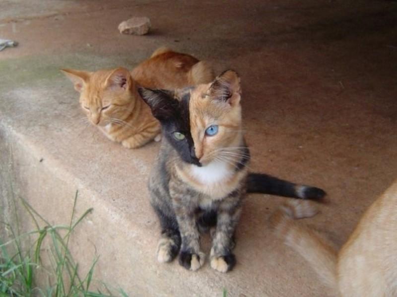 44 800x599 Венера   кошка химера