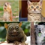 Животные, которые волнуются за вас