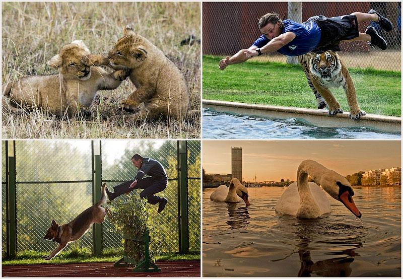 Забавные, трогательные и интересные фотографии животных за минувшую неделю