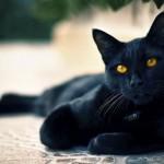 Самые популярные суеверия и их происхождение