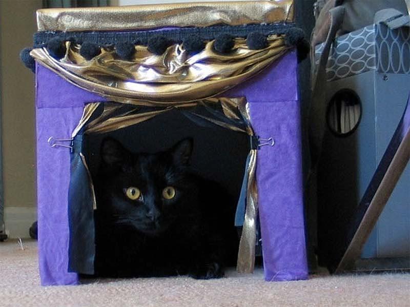 For Cats 9 Кошачьи домики
