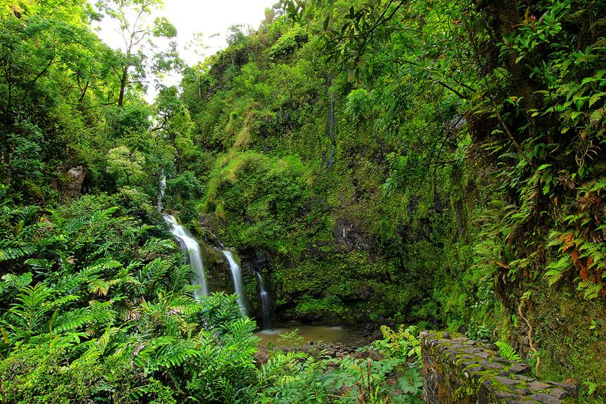 GARDEN OF EDEN ARBORETUM 12 Сады острова Мауи