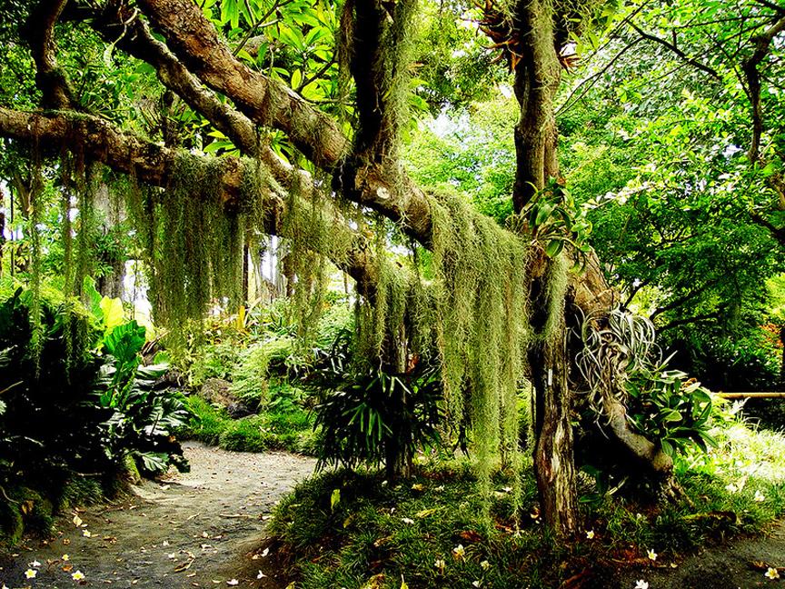 GARDEN OF EDEN ARBORETUM 13 Сады острова Мауи
