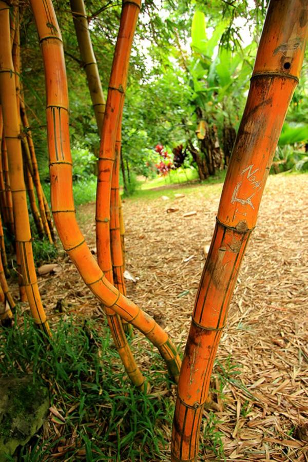 GARDEN OF EDEN ARBORETUM 18 Сады острова Мауи