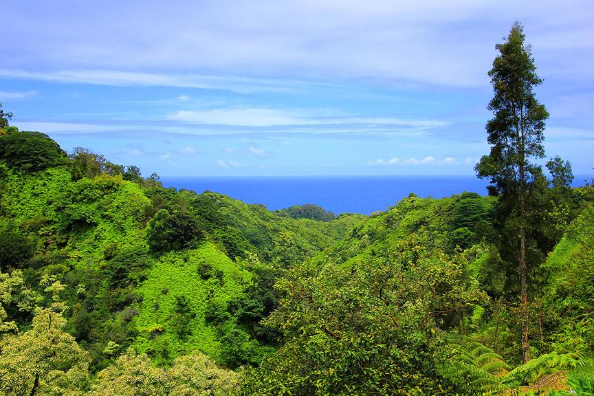 GARDEN OF EDEN ARBORETUM 20 Сады острова Мауи