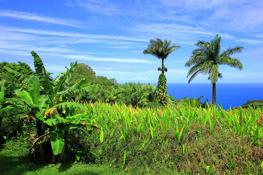 GARDEN OF EDEN ARBORETUM 21 Сады острова Мауи