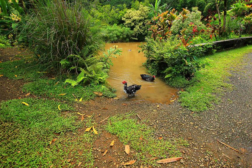 GARDEN OF EDEN ARBORETUM 26 Сады острова Мауи