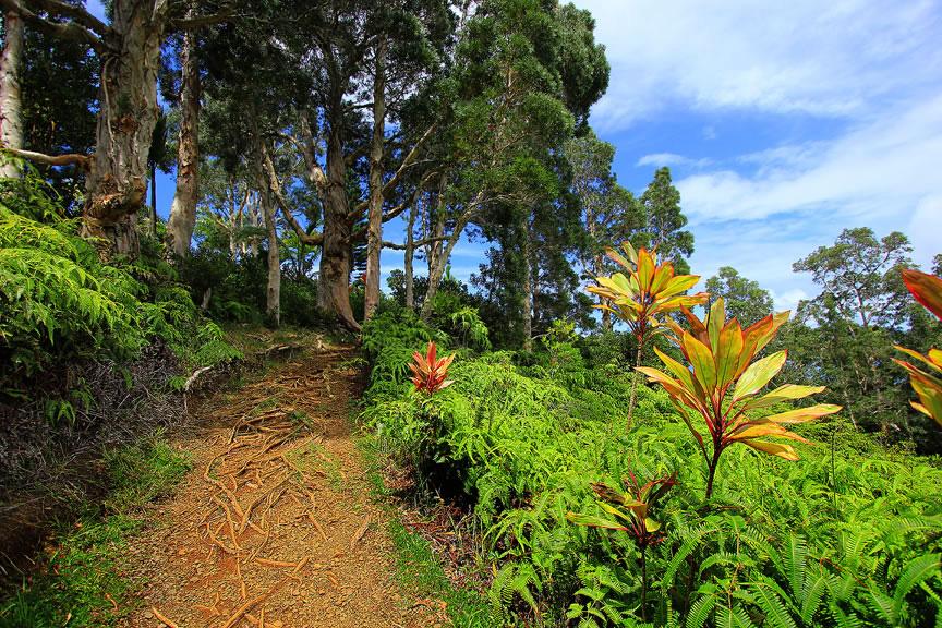 GARDEN OF EDEN ARBORETUM 4 Сады острова Мауи