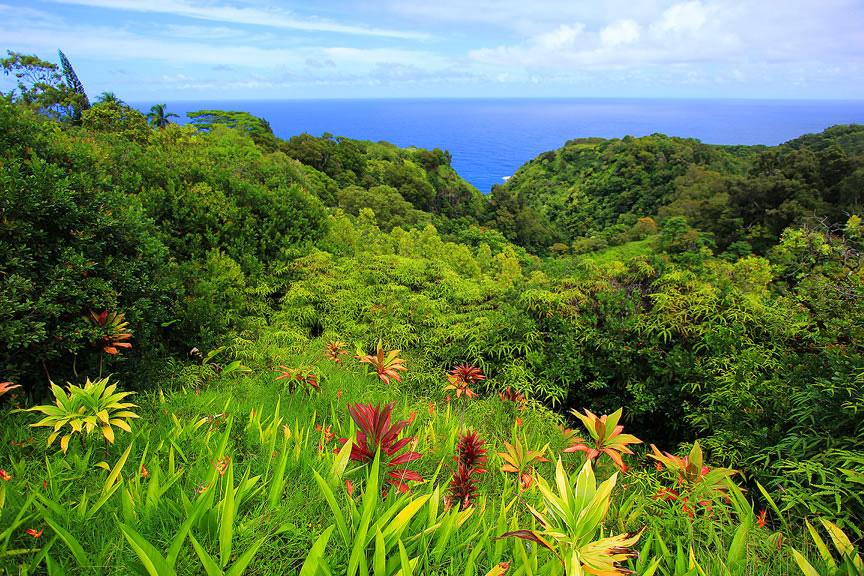 GARDEN OF EDEN ARBORETUM 5 Сады острова Мауи