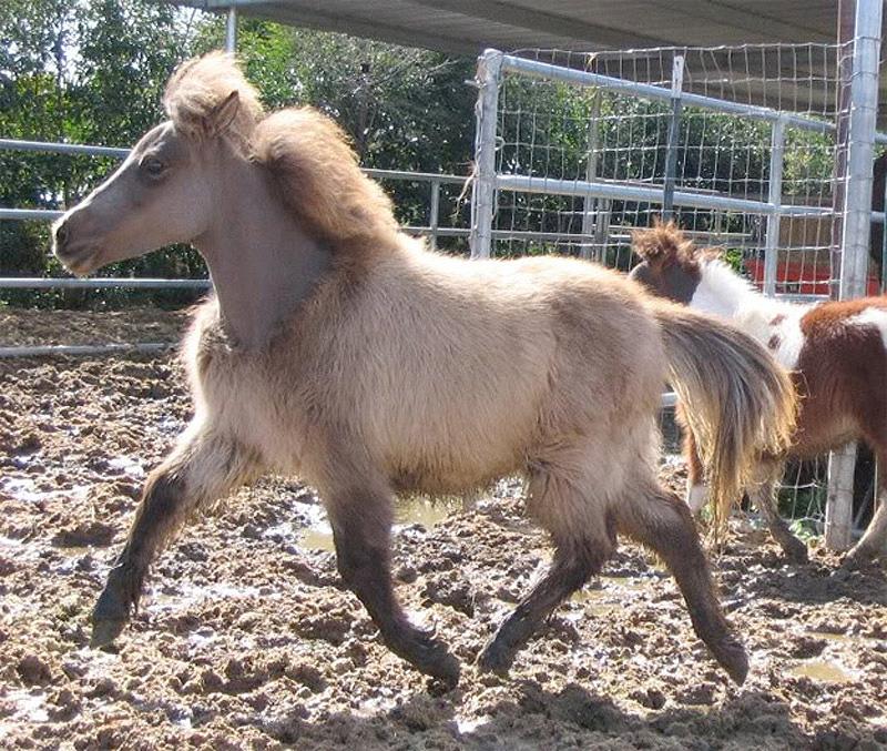 Half Shaved Animals 12 Полубритые животные