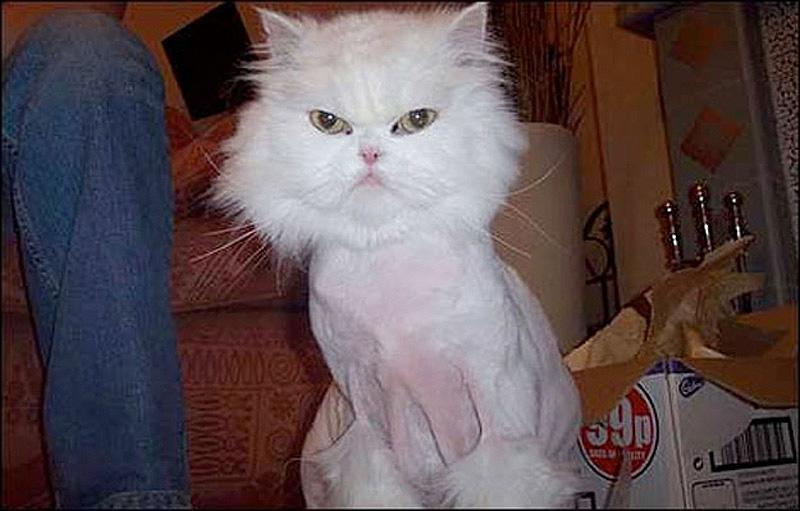 Half Shaved Animals 13 Полубритые животные