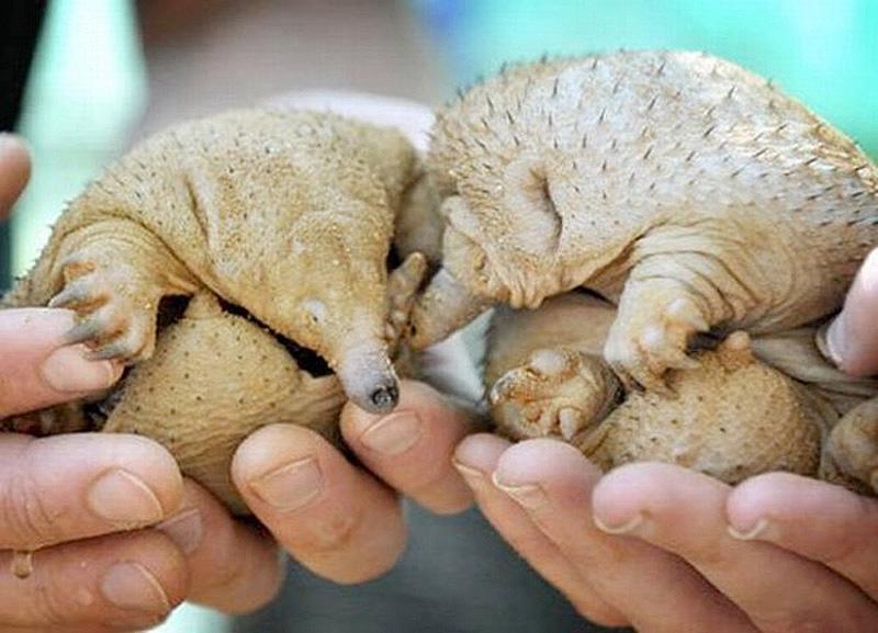 Half Shaved Animals 14 Полубритые животные