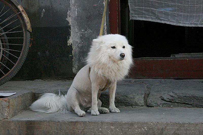 Half Shaved Animals 18 Полубритые животные