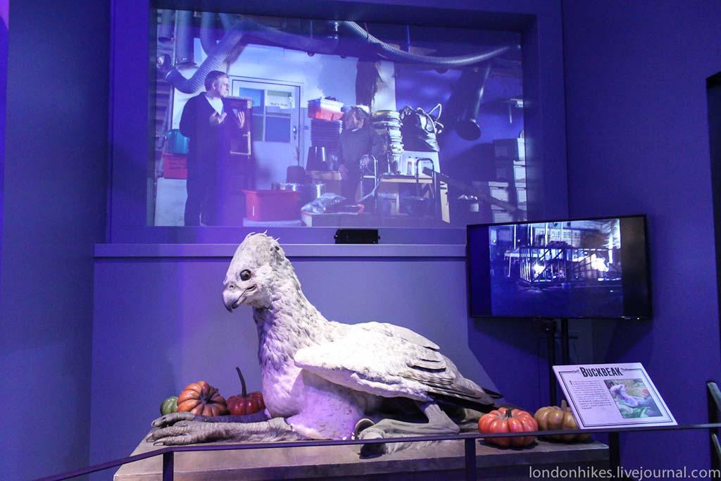 HarryPotter 70 Музей маленького мальчика в очках