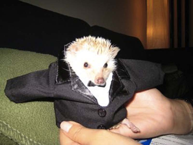 http://bigpicture.ru/wp-content/uploads/2012/10/Hedgehog-For-Halloween-15.jpg