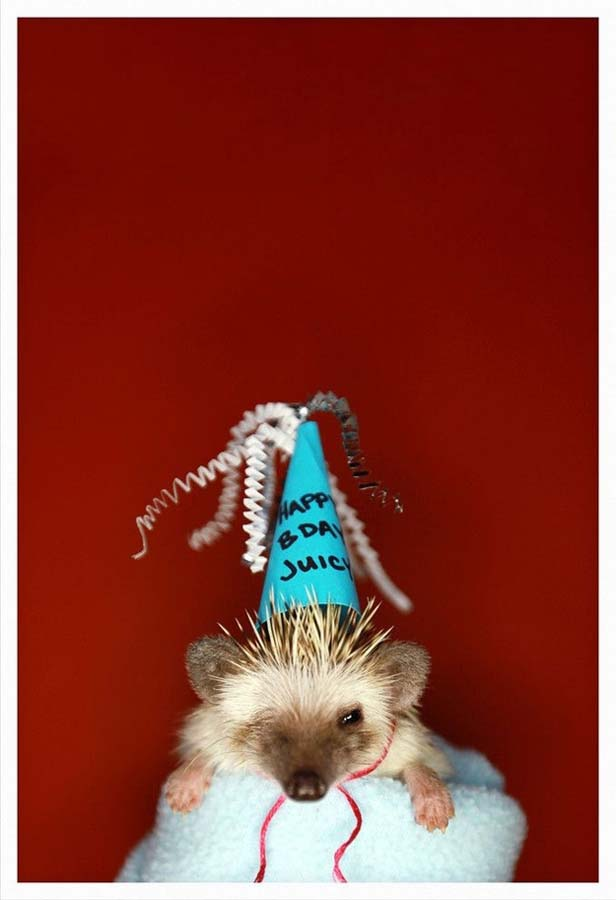 http://bigpicture.ru/wp-content/uploads/2012/10/Hedgehog-For-Halloween-9.jpg