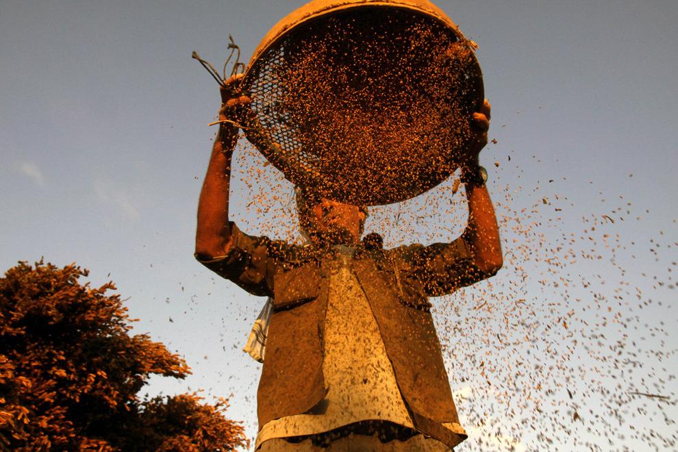 Niranjan Shrestha 10 Повседневная жизнь в разных странах мира в сентябре 2012
