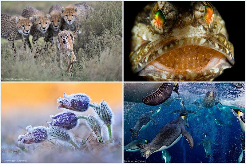 Победители Конкурса фотографий дикой природы 2012  (начало)