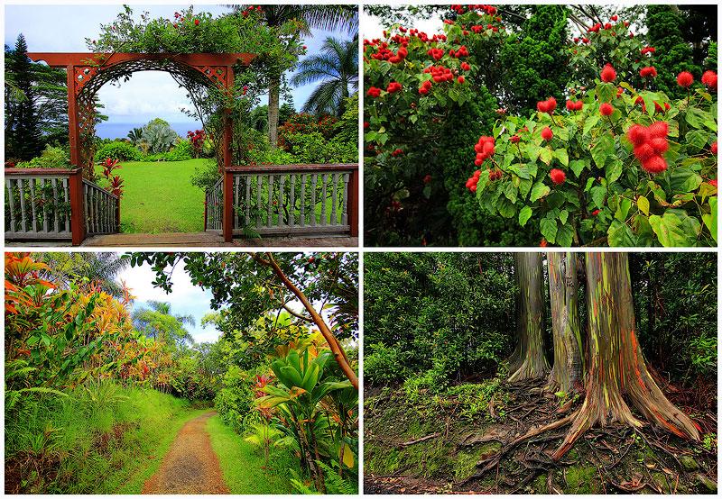 TEMP16 Сады острова Мауи
