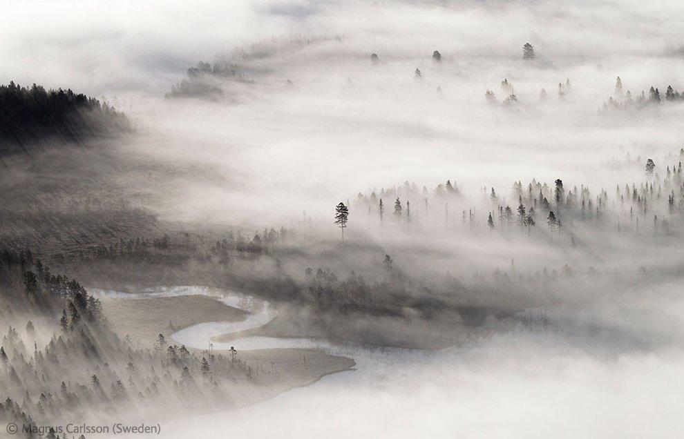Veolia Environnement Wildlife Photographer 13 Победители Конкурса фотографий дикой природы 2012