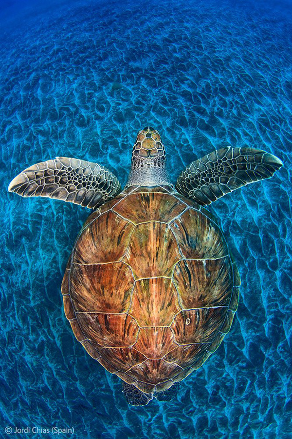 Veolia Environnement Wildlife Photographer 18 Победители Конкурса фотографий дикой природы 2012