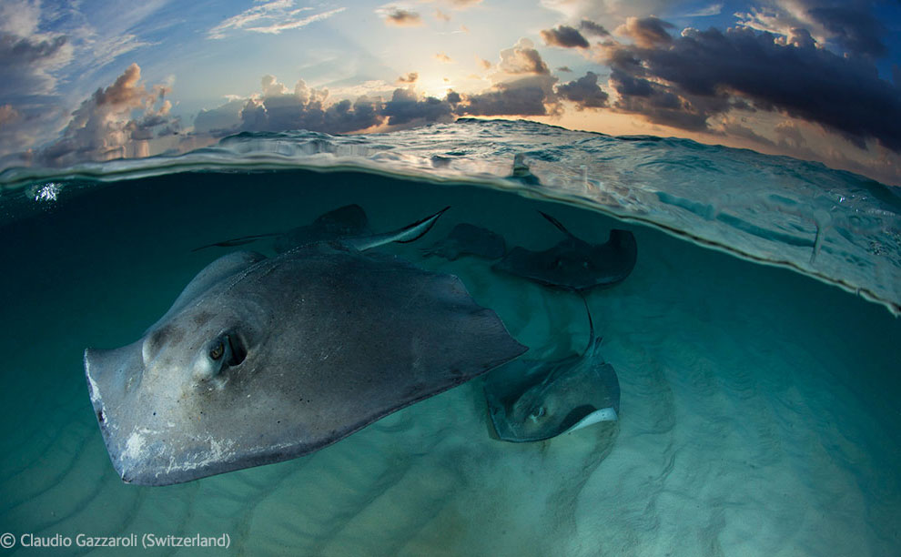 Veolia Environnement Wildlife Photographer 19 Победители Конкурса фотографий дикой природы 2012