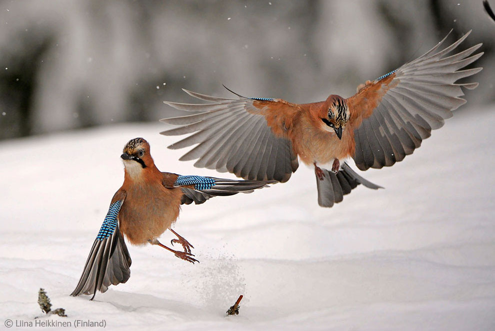 Veolia Environnement Wildlife Photographer 2 Победители Конкурса фотографий дикой природы 2012