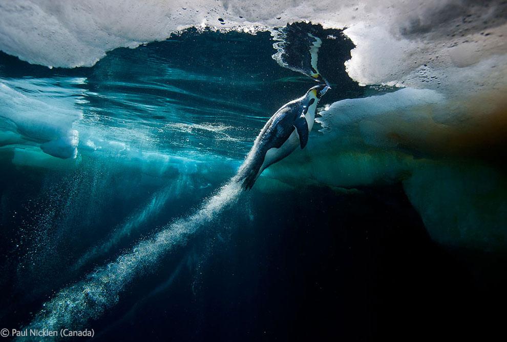 Veolia Environnement Wildlife Photographer 20 Победители Конкурса фотографий дикой природы 2012