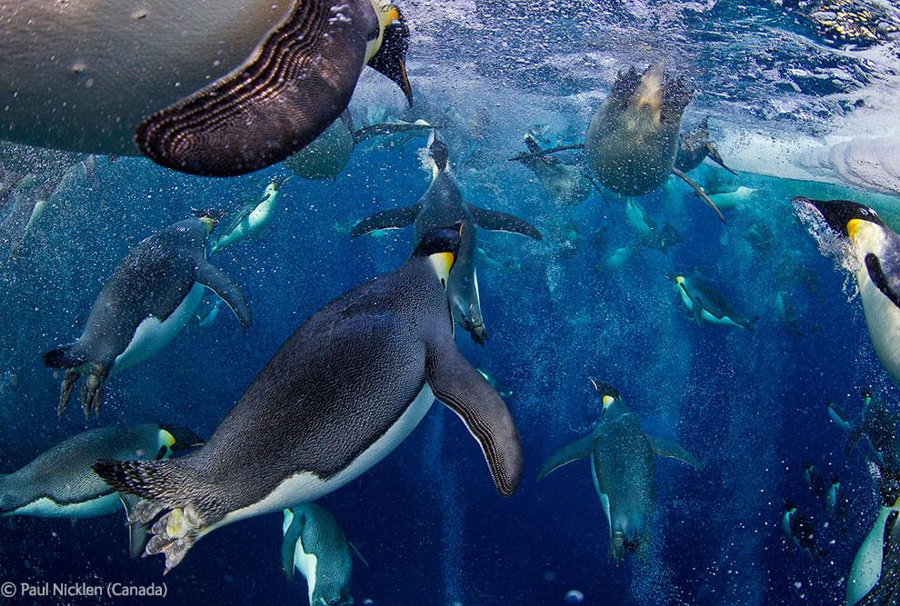 Veolia Environnement Wildlife Photographer 21 Победители Конкурса фотографий дикой природы 2012