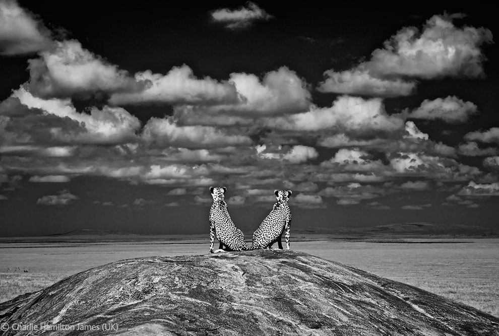 Veolia Environnement Wildlife Photographer 22 Победители Конкурса фотографий дикой природы 2012