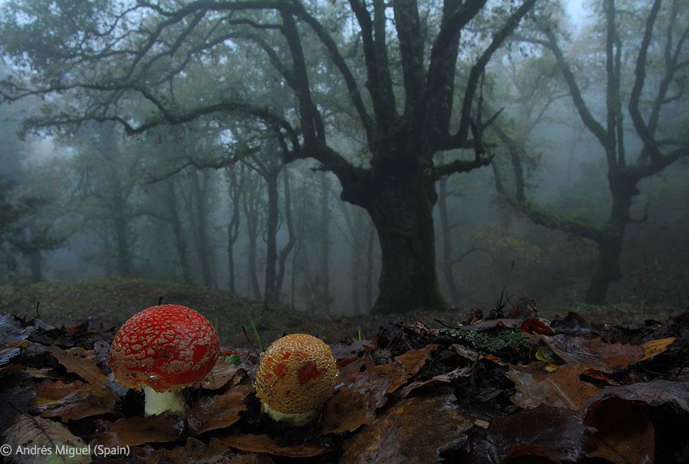 Veolia Environnement Wildlife Photographer 26 Победители Конкурса фотографий дикой природы 2012