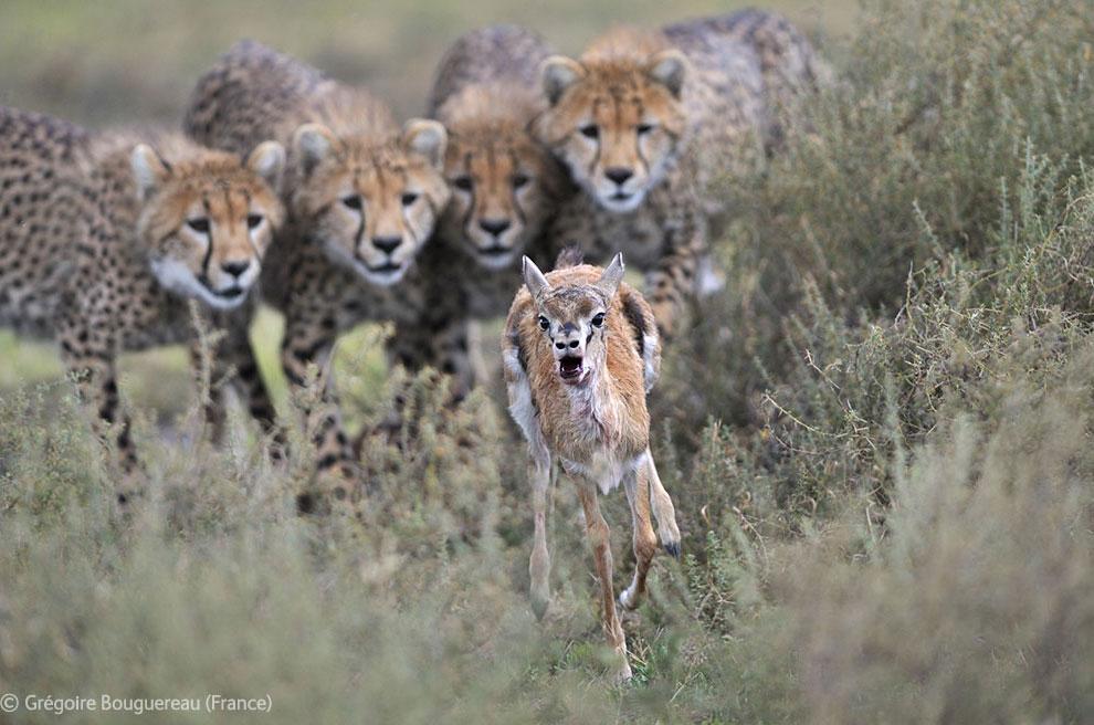 Veolia Environnement Wildlife Photographer 29 Победители Конкурса фотографий дикой природы 2012