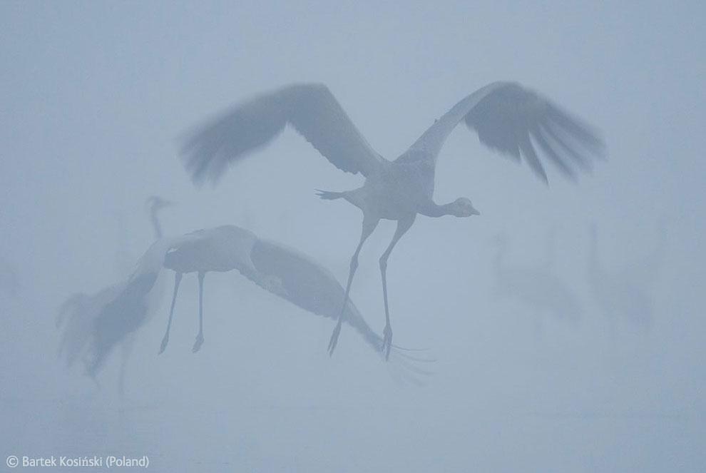 Veolia Environnement Wildlife Photographer 3 Победители Конкурса фотографий дикой природы 2012