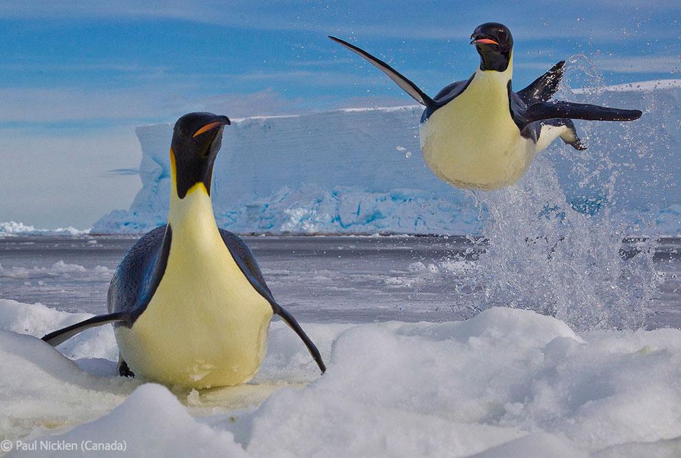 Veolia Environnement Wildlife Photographer 34 Победители Конкурса фотографий дикой природы 2012